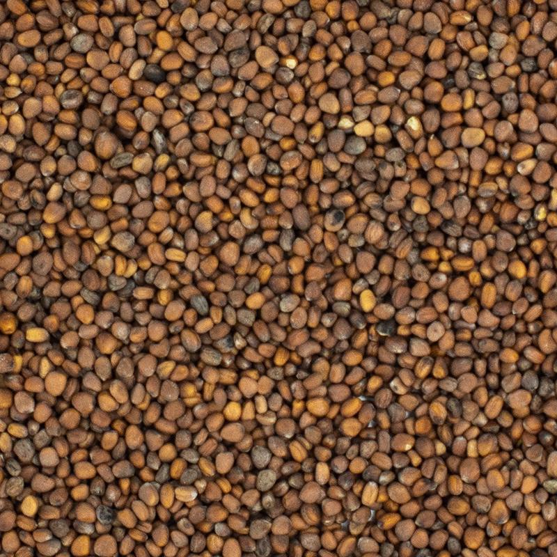 Daikon Radish Sprout Seed