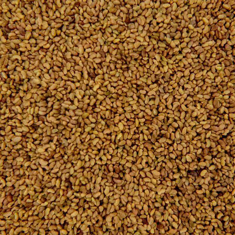 Mustard Sprout Seed