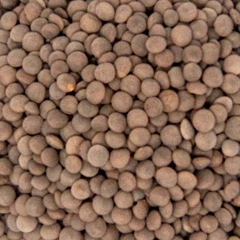 Green Lentil Sprout Seed