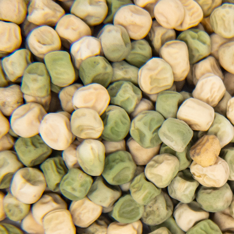 Green Peas Sprout Seed